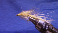 Golden Shiner Leech
