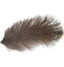 Natures Spirit Ostrich Plume